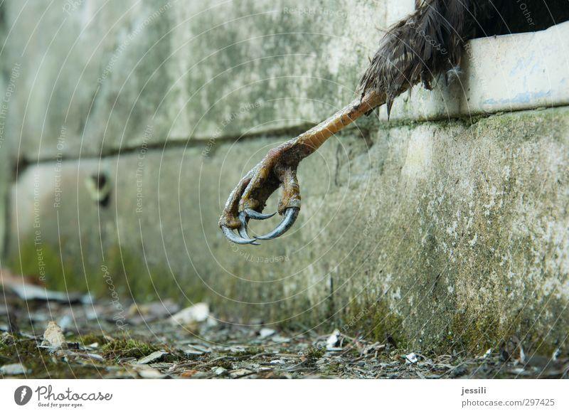 trapped Tier Tod Stil träumen Vogel Wildtier Todesangst Gemälde Burg oder Schloss Filmindustrie gruselig Jagd Bühne Musik Kino Künstler