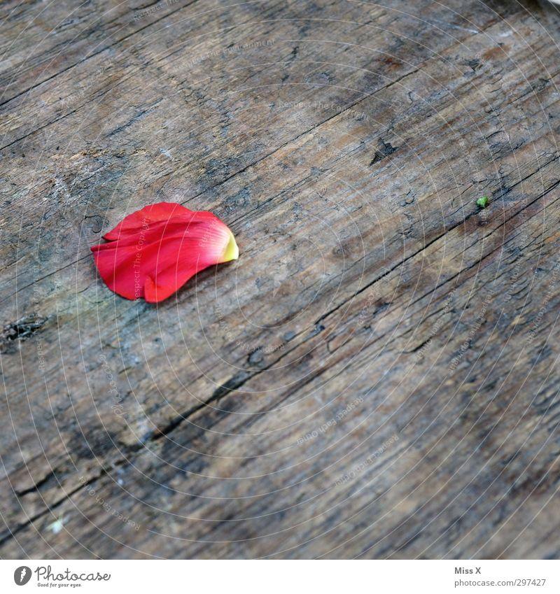Rosenblatt Blume Blüte Holz verblüht dehydrieren rosa rot Rosenblätter Blütenblatt Farbfoto mehrfarbig Nahaufnahme Menschenleer Textfreiraum rechts