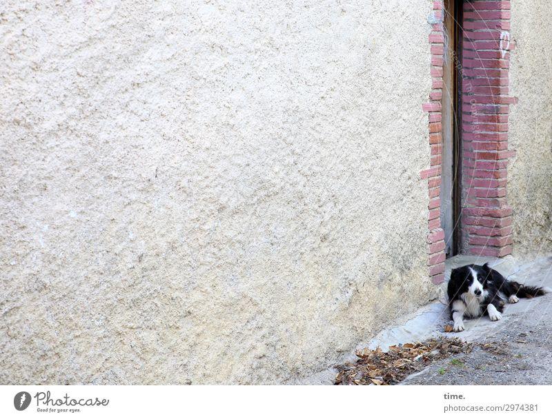 Türvorleger Haus Mauer Wand Tier Haustier Hund 1 Stein beobachten liegen Blick warten Wachsamkeit Gelassenheit geduldig ruhig Neugier Interesse Erholung