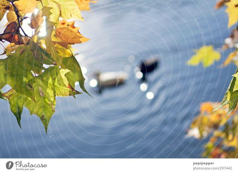 loseblattwerke Ausflug Sommer Sommerurlaub Wellen Pflanze Tier Wasser Schönes Wetter Blatt Park Seeufer Teich Wildtier Vogel Entenvögel 2 Tierpaar Brunft