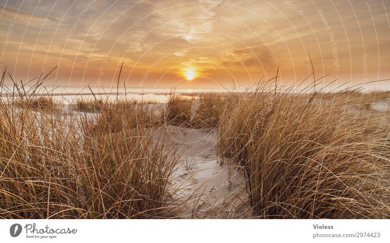 Auszeit Sonnenuntergang orange Strand Düne Stranddüne Meer Dünengras Wolken Dänemark Ferien & Urlaub & Reisen Erholung Nordsee