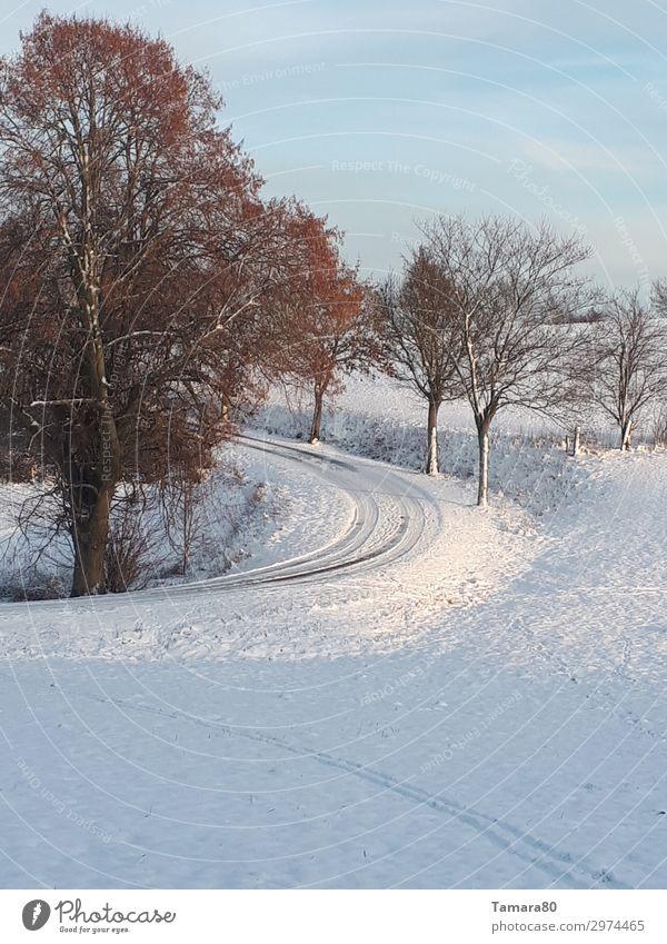 Wintertag Natur Landschaft Erholung ruhig Schnee Zufriedenheit wandern harmonisch friedlich achtsam