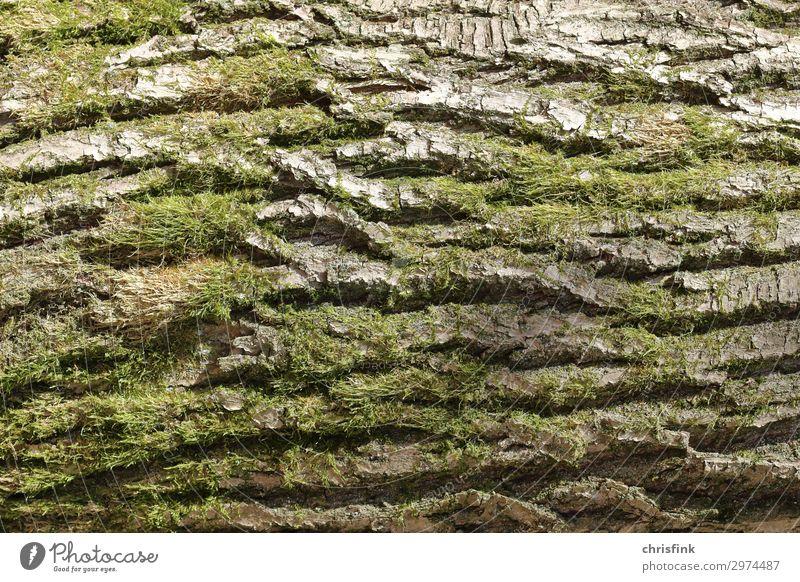 Baumrinde Pflanze Moos Wald tragen Wachstum alt natürlich braun grün Natur Farbfoto Außenaufnahme Tag Licht Schatten