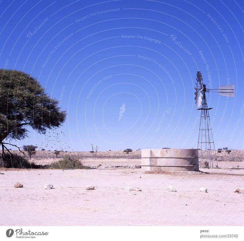 Traenke Kalaharie Wasser Afrika Wüste Wasserstelle