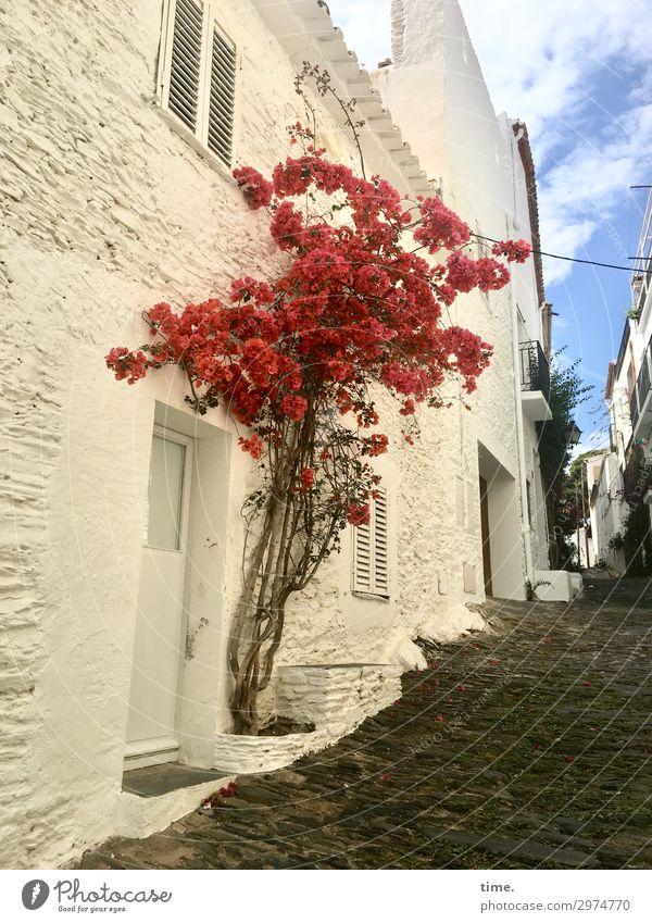 Sommer vor der Tür Schönes Wetter Baum Blüte Cadaques Katalonien Spanien Stadtzentrum Altstadt Haus Mauer Wand Fenster Wege & Pfade Kopfsteinpflaster