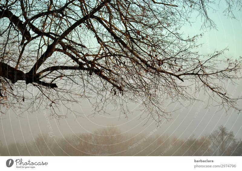 nebulös   Abendstimmung Himmel Natur Landschaft Baum ruhig Gefühle Stimmung hell Nebel Sträucher Klima Wandel & Veränderung Urelemente