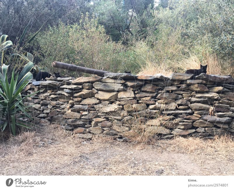Community Schönes Wetter Pflanze Park Cadaques Mauer Wand Tier Haustier Katze Tiergruppe Stein beobachten Blick sitzen Sicherheit Schutz Freundschaft