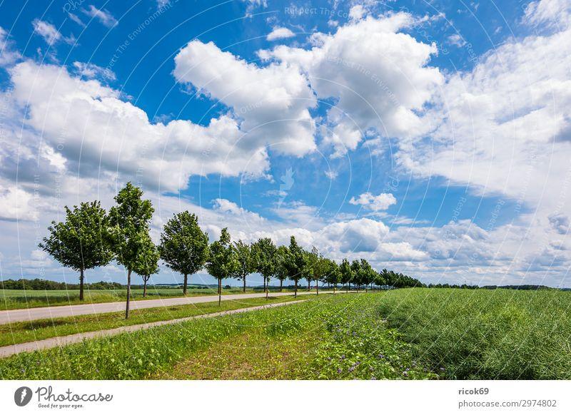 Feld mit Bäumen in der Nähe von Rostock Erholung Ferien & Urlaub & Reisen Tourismus Landwirtschaft Forstwirtschaft Umwelt Natur Landschaft Pflanze Wolken