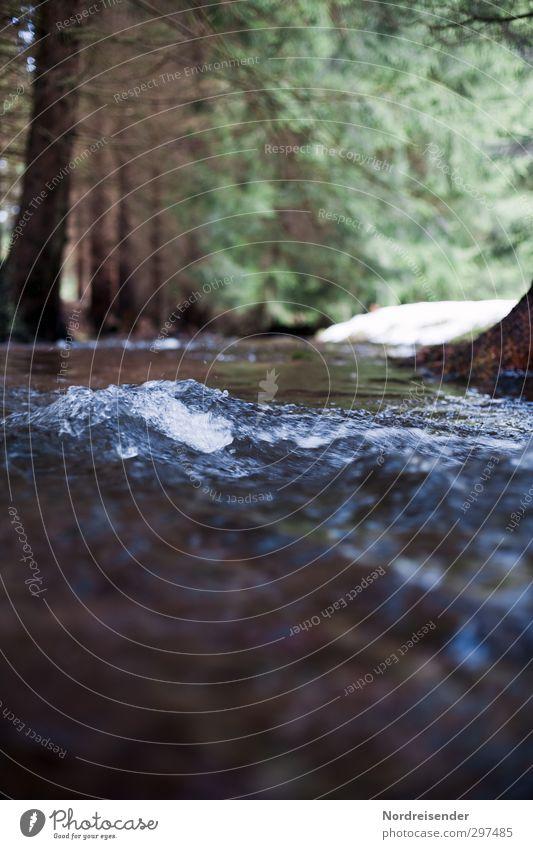 Wasserrechte Trinkwasser Natur Urelemente Frühling Klima Baum Wald Wellen Flussufer Bach Erholung kalt nachhaltig nass natürlich Sauberkeit blau grün ruhig