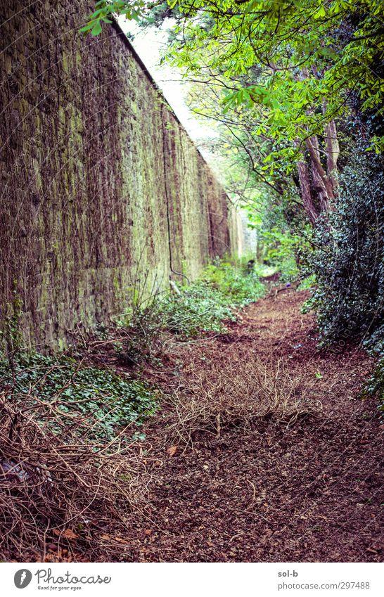 Verloren Garten Natur Pflanze Baum Sträucher Blatt Park Dublin Republik Irland Mauer Wand Wege & Pfade alt dreckig natürlich braun grün Einsamkeit vergessen
