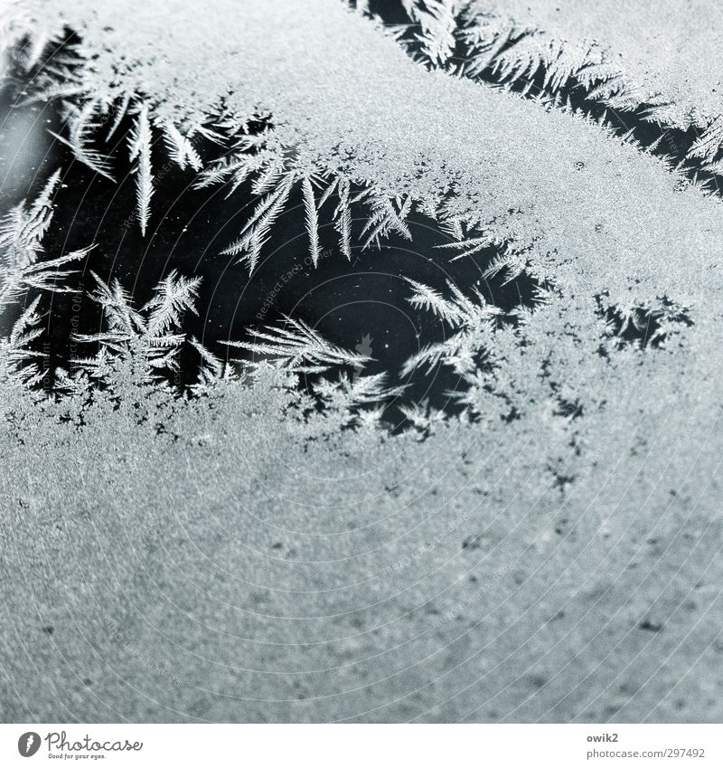 Kristalle am Fenster Winter kalt Eis Spitze Frost bizarr stachelig Eisblumen
