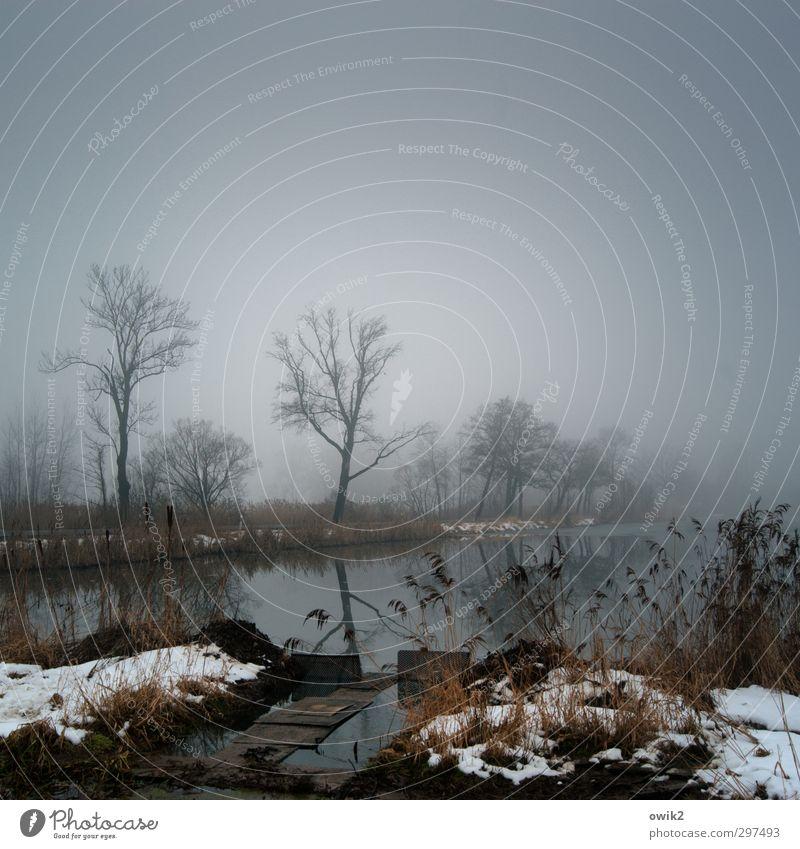 Schönes Wetter Himmel Natur Pflanze Wasser Baum Landschaft ruhig Ferne Winter dunkel Umwelt Traurigkeit Horizont Eis Idylle