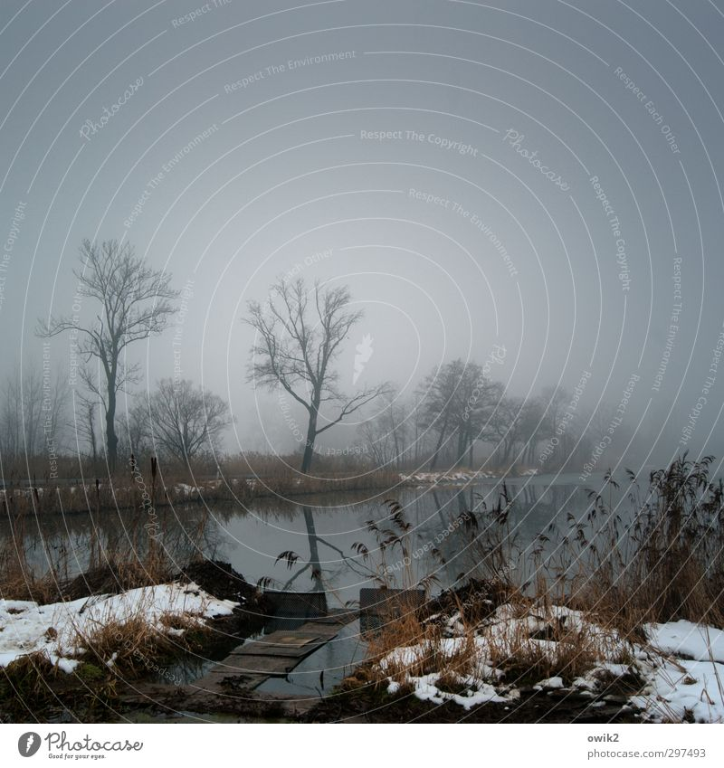 Schönes Wetter Umwelt Natur Landschaft Pflanze Wasser Himmel Horizont Winter Klima Nebel Eis Frost Baum Sträucher dunkel geduldig ruhig Fernweh Idylle Trauer
