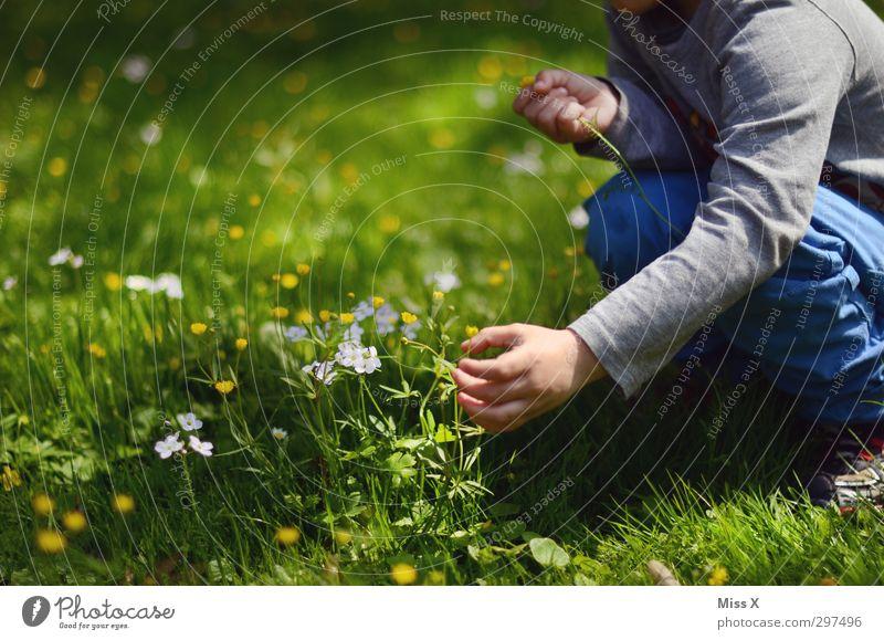 Muttertag kommt immer so plötzlich Valentinstag Mensch Kind Kleinkind Kindheit Hand 1 1-3 Jahre 3-8 Jahre Frühling Sommer Blume Gras Blüte Garten Wiese Blühend