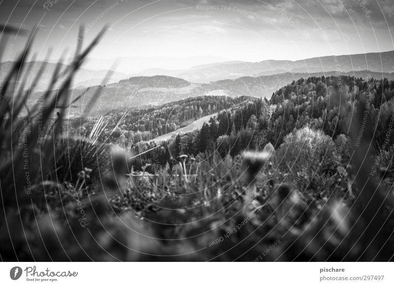 Grüne Mark Natur Landschaft Himmel Gras Wiese Wald Hügel Bundesland Steiermark Österreich Schwarzweißfoto Außenaufnahme Tag Dämmerung Licht Kontrast Unschärfe