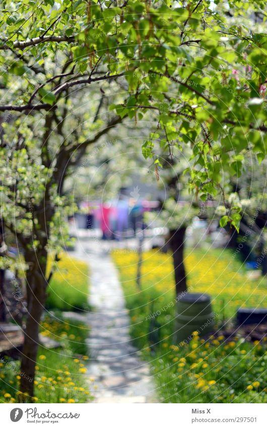 Wäsche im Garten Sommer Baum Wiese Frühling hell Stimmung Schönes Wetter frisch Häusliches Leben Idylle Blühend positiv Überraschung trocknen