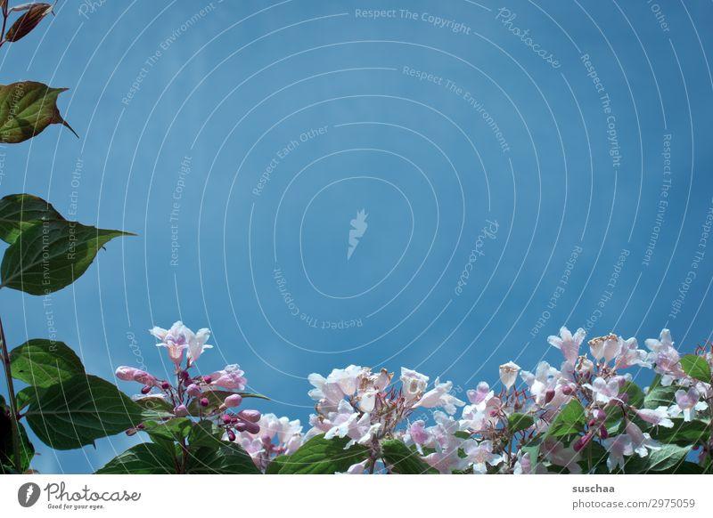 frühling Garten Außenaufnahme Klima Sommer Frühling Blume Kräuter & Gewürze Pflanze Gartenbau Natur natürlich Wellness Baum Blüte Himmel blau Rahmen