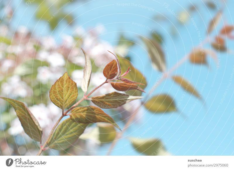 sommer Garten Außenaufnahme Klima Sommer Blume Blüte Pflanze Gartenbau Natur natürlich Wellness Frühling Blatt frisch Blattadern Baum Mai