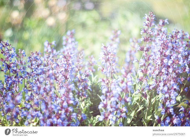 sommer (2) Wellness Leben Erholung Meditation Umwelt Natur Pflanze Frühling Sommer Klima Schönes Wetter Sträucher Blüte Grünpflanze Garten Park Wiese blau