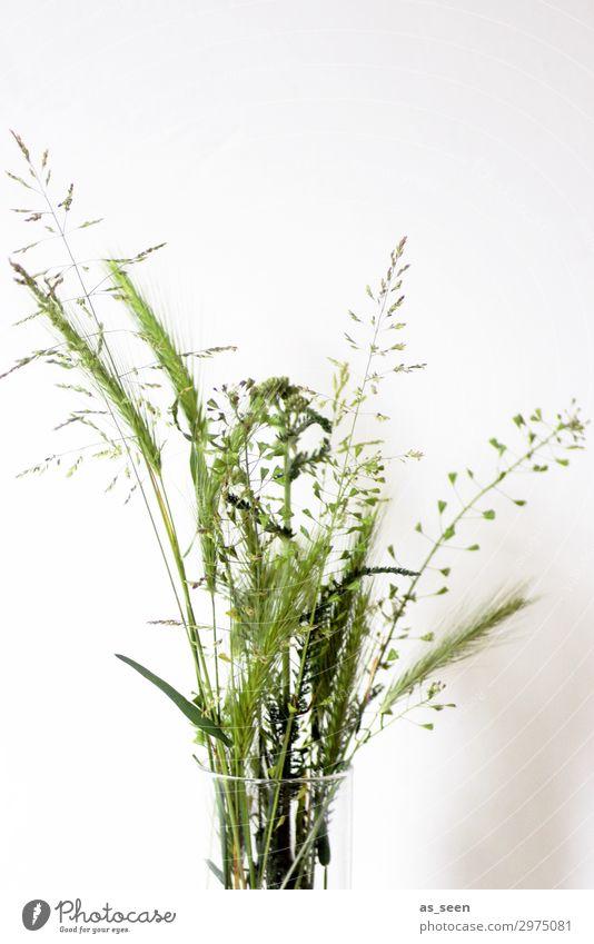 Sommergräser Vase Glasvase Wellness harmonisch Ausflug Innenarchitektur Dekoration & Verzierung Pflanze Grünpflanze Gras Gräserblüte Pollen Garten Blumenstrauß