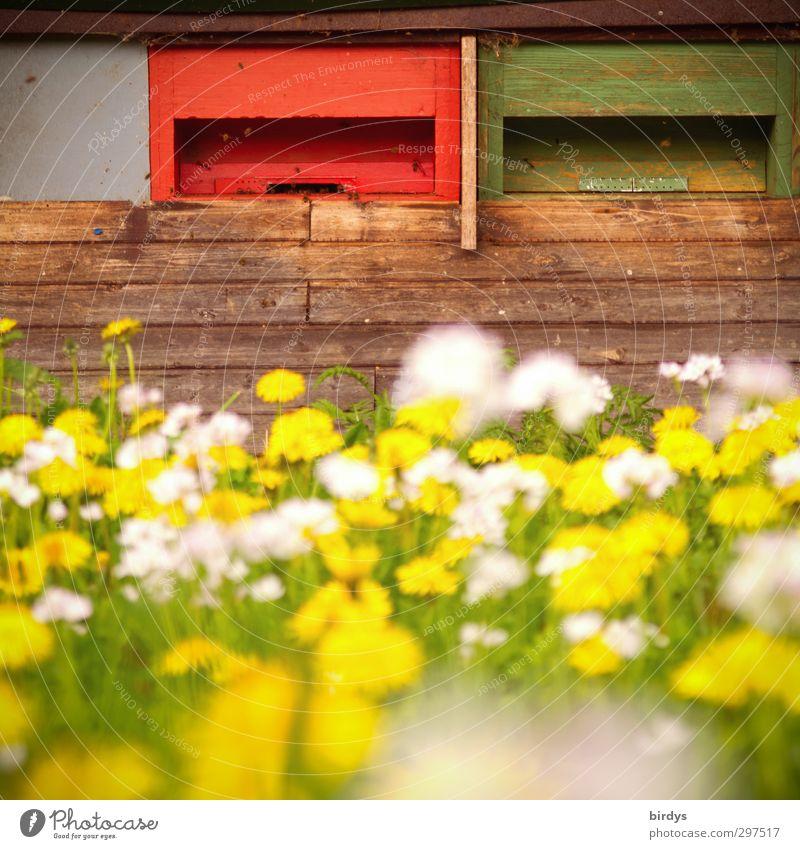 Bienenweide Natur schön Sommer Farbe Leben Frühling Garten Gesundheit Arbeit & Erwerbstätigkeit fliegen leuchten Schönes Wetter frisch Idylle Freundlichkeit