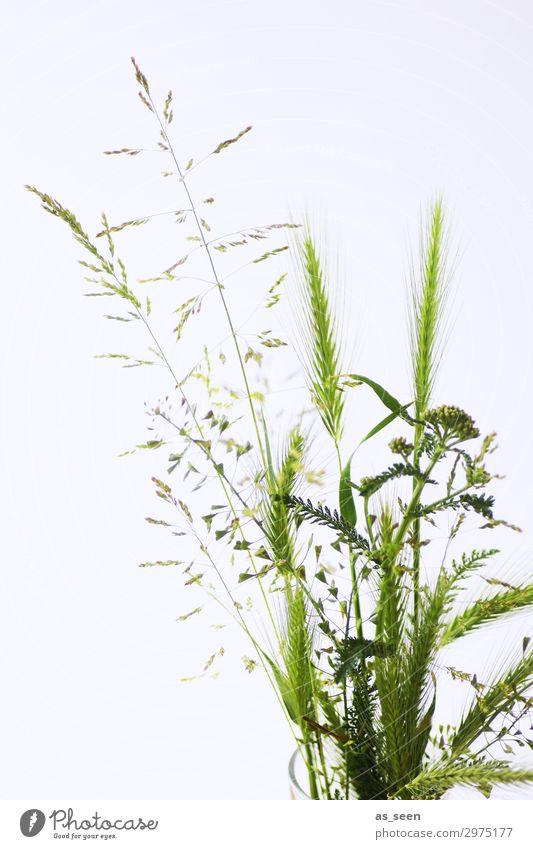 Sommergrün Lifestyle elegant Wellness Leben harmonisch Ausflug einrichten Innenarchitektur Pflanze Gras Grünpflanze Gräserblüte Pollen Feld