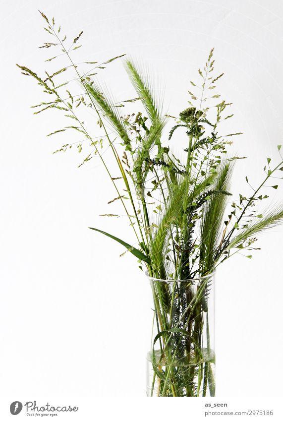 Sommergruß Pflanze Farbe grün weiß Blatt Leben Innenarchitektur natürlich Gras Ausflug Design Dekoration & Verzierung frisch modern elegant ästhetisch
