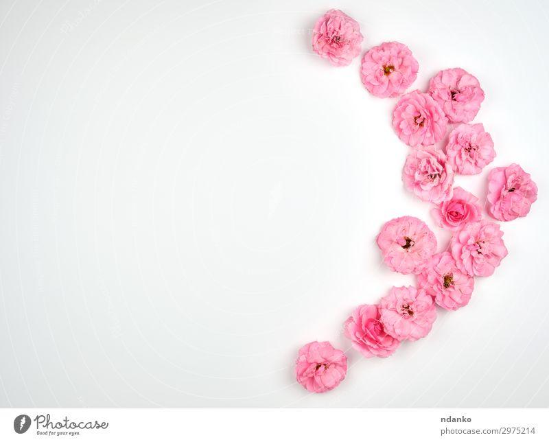 Natur Sommer Pflanze schön weiß Blume Blüte natürlich Feste & Feiern klein Kunst rosa Design Dekoration & Verzierung frisch Aussicht