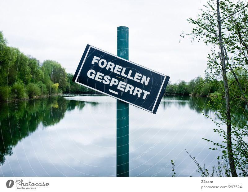 FORELLEN G E S P E R R T Fischereiwirtschaft Umwelt Natur Landschaft Himmel Pflanze Baum Sträucher Seeufer Schilder & Markierungen Hinweisschild Warnschild