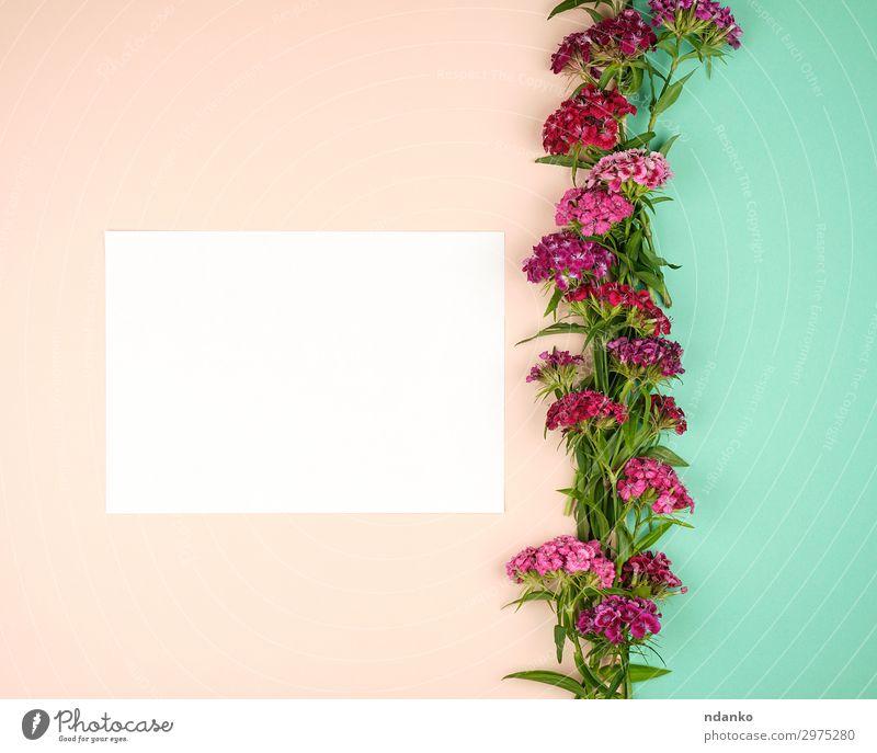 Natur Sommer Pflanze Farbe schön grün weiß rot Blume Blatt Blüte natürlich Feste & Feiern rosa Dekoration & Verzierung frisch