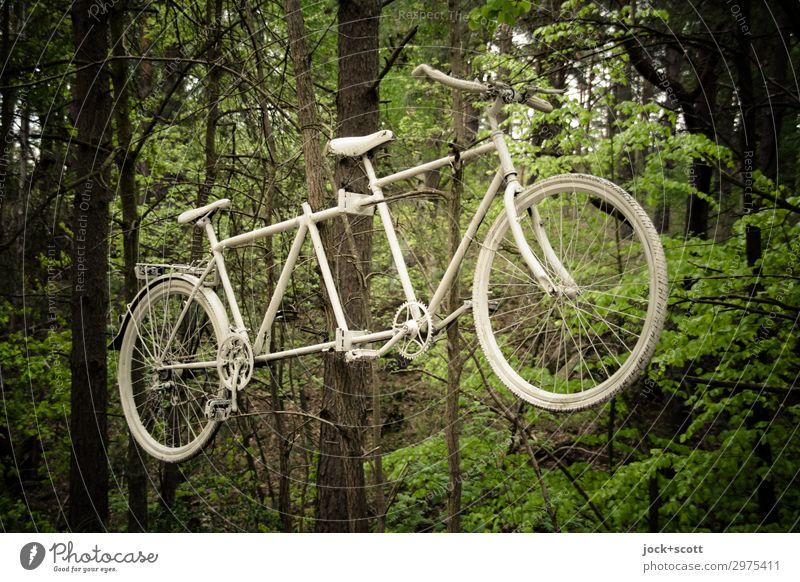 Geisterrad Ausflug Fahrradtour Baum Wald Müritz Verkehrsmittel Tandem Metall hängen außergewöhnlich grün weiß Stimmung Wachsamkeit Traurigkeit Tod Design Idee