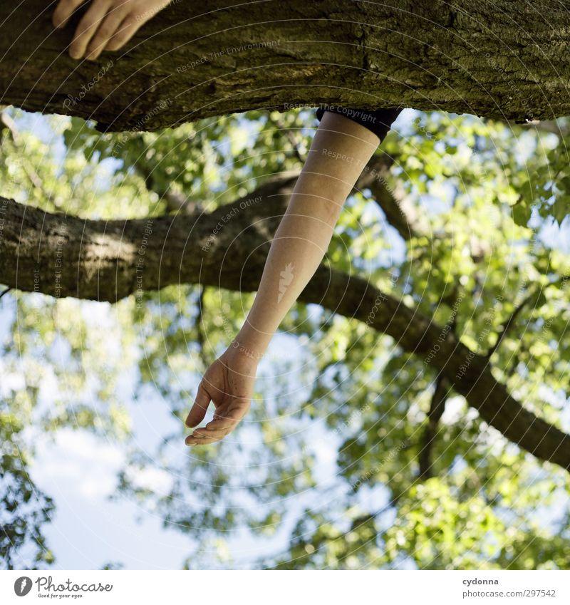 Frühlingsfeeling Mensch Natur Jugendliche Ferien & Urlaub & Reisen Sommer Baum Hand Erholung ruhig Wald 18-30 Jahre Erwachsene Umwelt Leben Freiheit