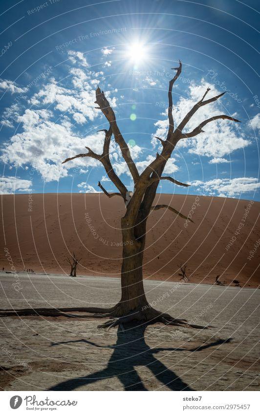wüste Zeiten blau Sonne Baum gelb braun Wandel & Veränderung bedrohlich trocken heiß Wüste Klimawandel Umweltverschmutzung Dürre Endzeitstimmung dehydrieren