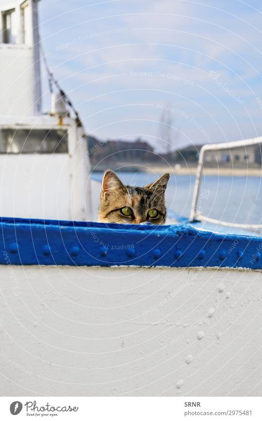 Matrosenkatze Tier Wasserfahrzeug An Bord Haustier Katze wandern Alleenkatze Holzplatte hinauskriechen hinauskriechend Hauskatze versteckend outbred Blick von