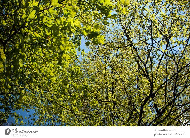 Natur Pflanze Luft Himmel Frühling Sommer Klima Klimawandel Wetter Schönes Wetter Baum Blatt Garten Park Wald Leben nachhaltig Pause Ferien & Urlaub & Reisen