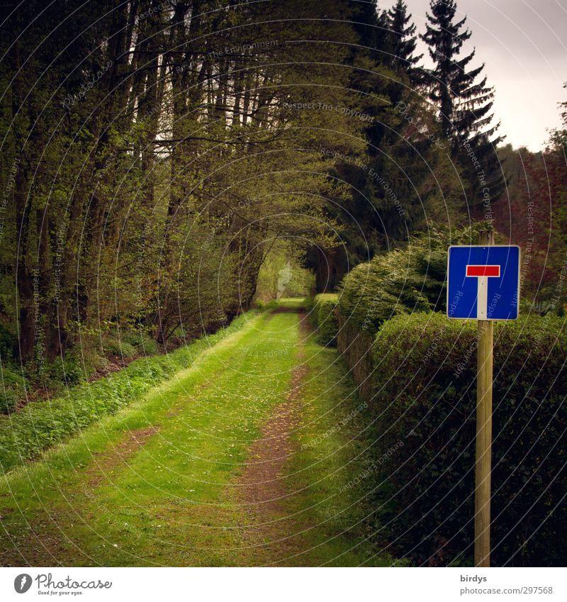 grüne Sackgasse Natur Frühling Sommer Wiese Wald Schilder & Markierungen Verkehrszeichen außergewöhnlich dunkel natürlich blau Wege & Pfade Farbfoto