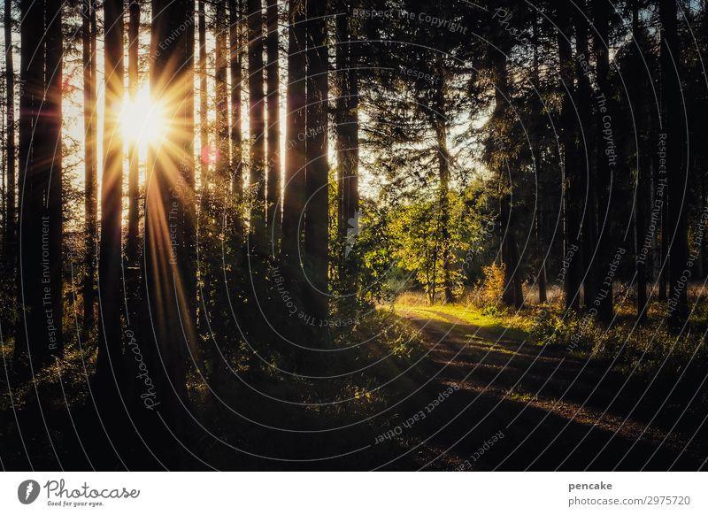 energiequelle Natur Sommer Landschaft Sonne Baum Wald Wärme wandern Schönes Wetter Energie Fußweg Fichte