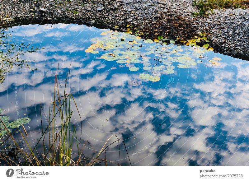 dem himmel nah Umwelt Natur Landschaft Pflanze Sommer Klima Klimawandel Wald Moor Sumpf Teich Hoffnung Glaube demütig Trauer Tod Reflexion & Spiegelung Himmel