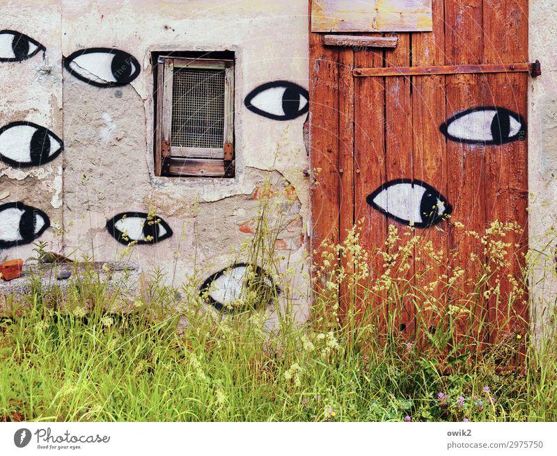 Denkmalschutz is watching you Kunst Kunstwerk Gemälde Pflanze Sommer Gras Sträucher Halm bewachsen Dorf Menschenleer Haus Hütte Gebäude Abrissgebäude Ruine