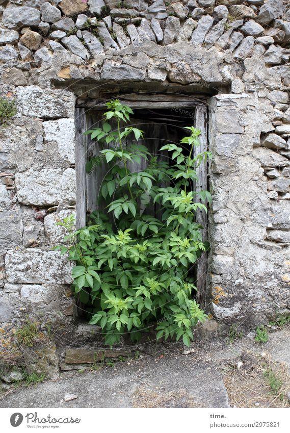 Landflucht Pflanze Baum Ruine Mauer Wand Eingang Stein Holz Zeichen außergewöhnlich historisch Neugier Kraft Tatkraft Wahrheit Leben Ausdauer Partnerschaft