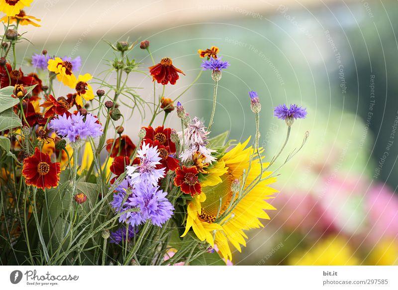 Vorschau auf den Sommer Natur Pflanze schön Sommer Blume Herbst Frühling Blüte Glück Feste & Feiern Garten Häusliches Leben Geburtstag Lebensfreude Blühend Hochzeit