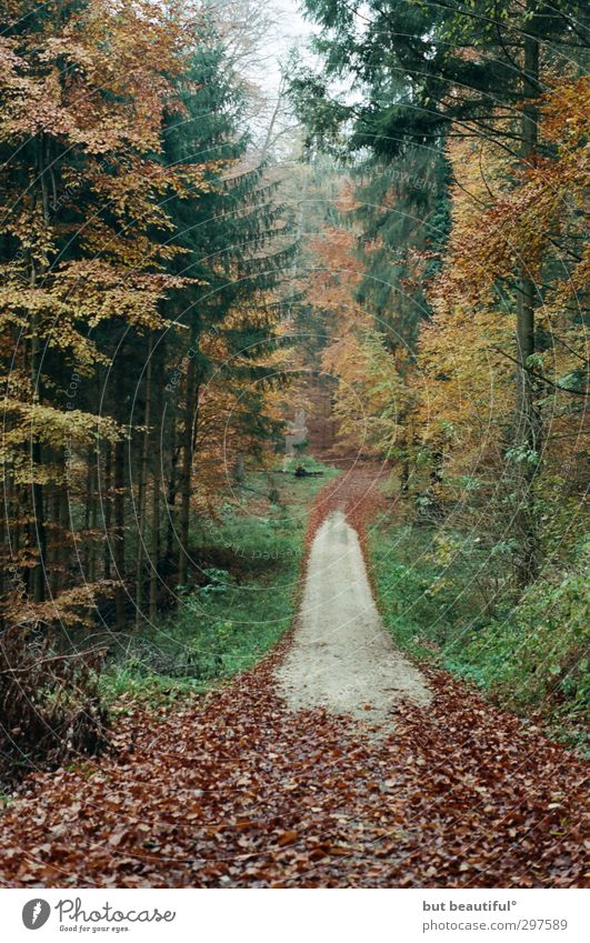 herbstbild mit weg oder so° Natur Baum Landschaft ruhig Wald Umwelt Herbst Gelassenheit Wachsamkeit geduldig achtsam