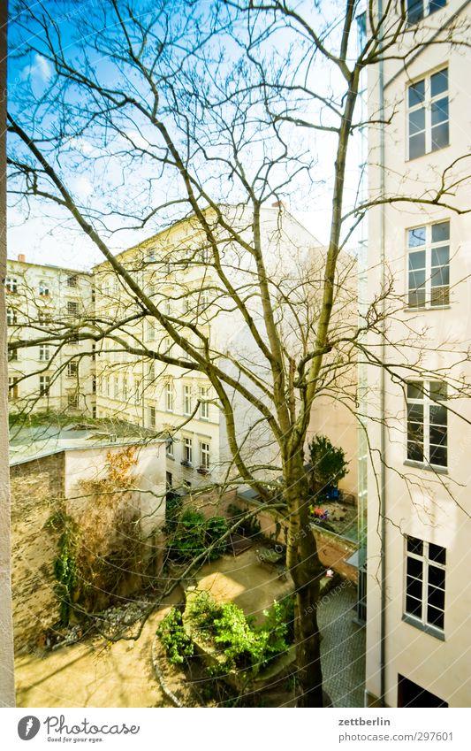 Hof mit mehr Sonne Natur Stadt Baum Haus Umwelt Fenster Wand Berlin Mauer Garten Wetter Fassade Klima Schönes Wetter Häusliches Leben gut