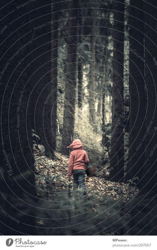 #200#...kleine Geschichten Mensch Kind Natur Pflanze Baum rot Mädchen Blatt Wald Umwelt Gras träumen Kindheit laufen wandern Sträucher