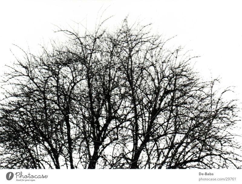 Winterbaum Baum Winter Ast Baumkrone