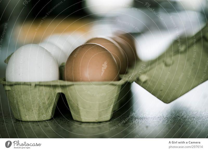 Rømø - nicht ganz Vegan ... Lebensmittel Ei Ernährung Frühstück Bioprodukte Vegetarische Ernährung frisch Gesundheit natürlich rund braun weiß Eierpaletten