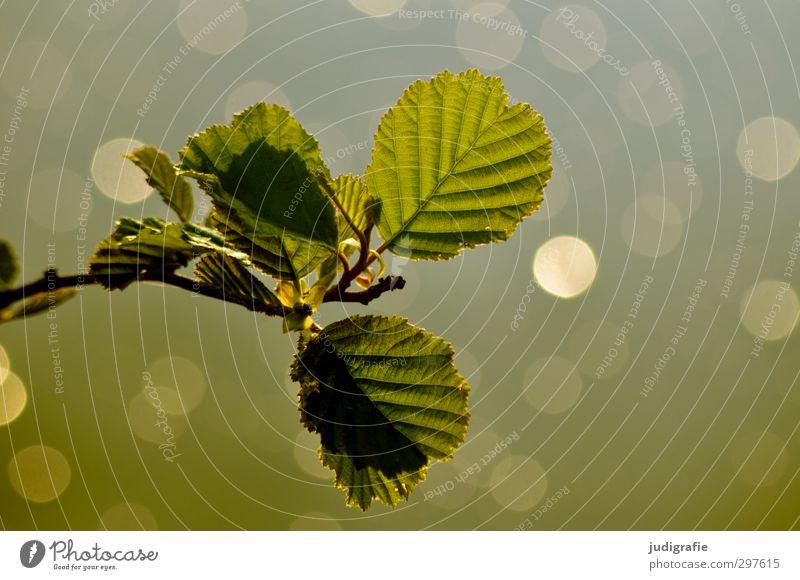 Maiglitzern Umwelt Natur Pflanze Wasser Frühling Klima Baum Blatt Teich See leuchten Wachstum glänzend natürlich grün Stimmung Farbfoto Außenaufnahme