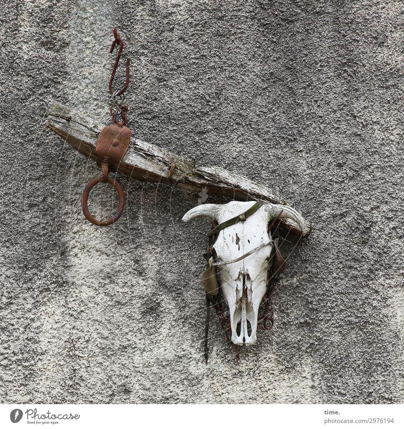 spooky Landwirtschaft Forstwirtschaft Handwerk Mauer Wand Totes Tier Kuh Tiergesicht Skelett 1 Dekoration & Verzierung Souvenir Sammlerstück Stein Holz Metall