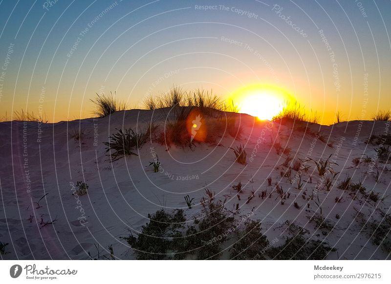 Dünenschönheit II Umwelt Natur Landschaft Sand Himmel Wolkenloser Himmel Sonne Sonnenaufgang Sonnenuntergang Sommer Schönes Wetter Küste Strand Meer Atlantik