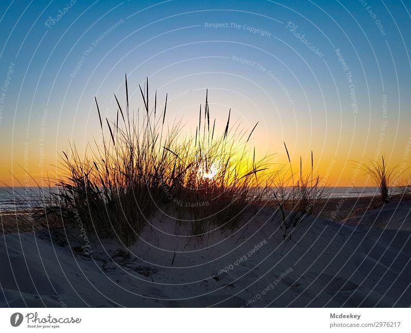 Dünenschönheit I Umwelt Natur Landschaft Sand Wasser Himmel Wolkenloser Himmel Sonne Sonnenaufgang Sonnenuntergang Sommer Schönes Wetter Küste Strand Meer